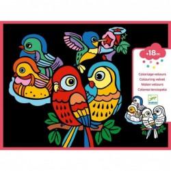 Bársonyszínező - Baby birds